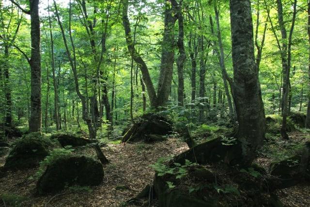 【白神山地】動植物のサンクチュアリ|世界最大のブナ天然林に関する情報まとめ